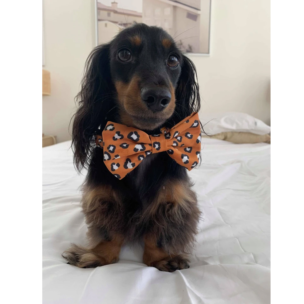THAT LEOPARD BOW TIE Pablo and Co 2 - Oasis Pet Styling Dog Grooming Cat Pet Groomers Singleton Hunter Valley